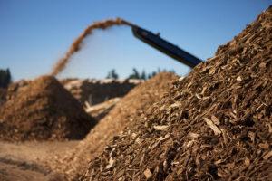 odkup lesa za biomaso