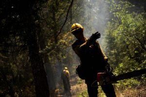 Pospravilo in posek lesa
