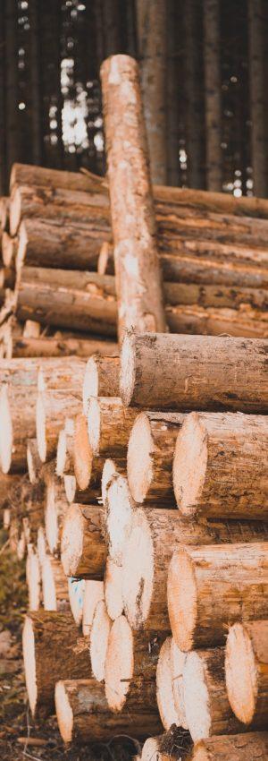 odkup lesa hlodovina