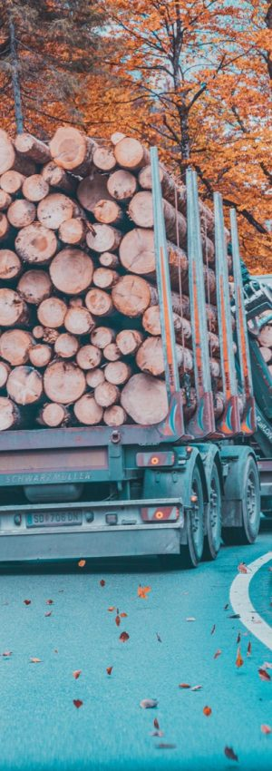 odkup lesa odvo in placilo takoj